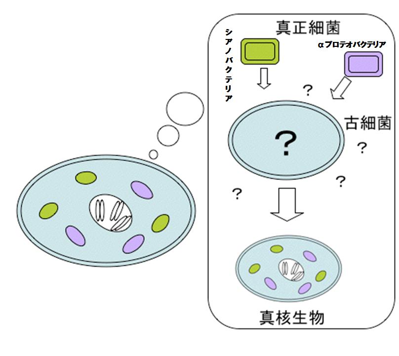 細胞 真 細胞 原核 違い の と 核